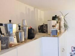 Sicheres Versteck: Bilderrätsel: Wer findet die Katze auf diesem Foto?