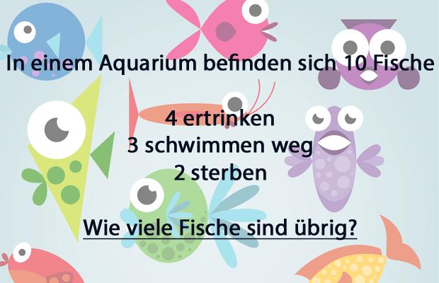 Kopfnuss Die Meisten Menschen Können Dieses Fisch Rätsel Nicht