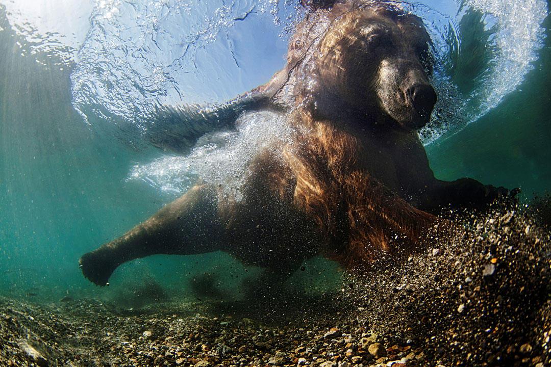 """""""Underwater Fisherman"""""""
