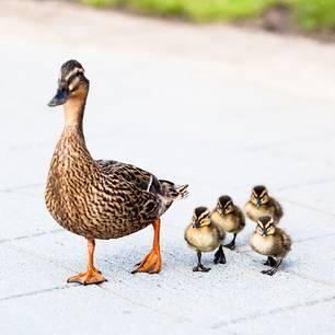 """Jesper Juul: """"Väter haben keine Ahnung, was es heißt, Mutter zu sein"""""""