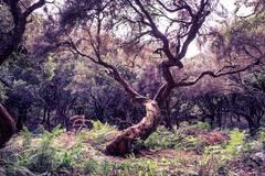 Keltisches Horoskop: Welcher Seelenbaum passt zu dir?