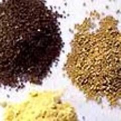 Senf - scharf und aromatisch