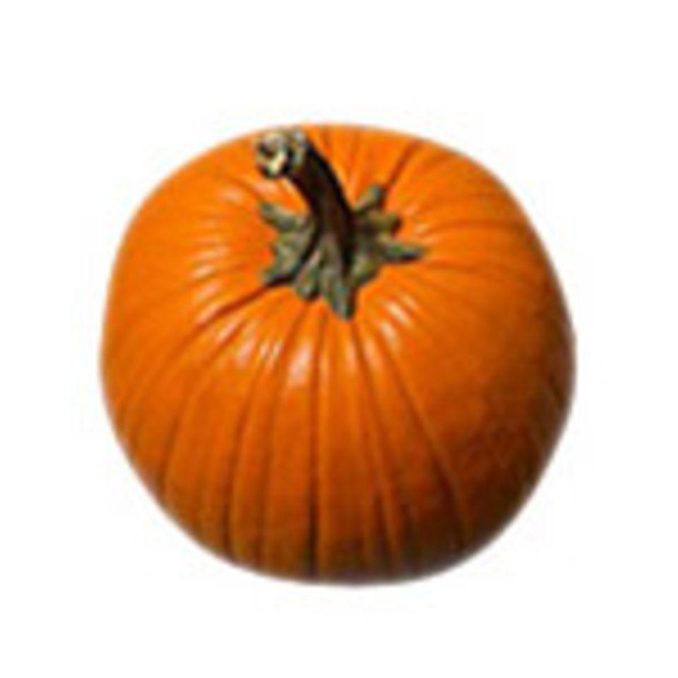 Unsere Lieblinge im Oktober