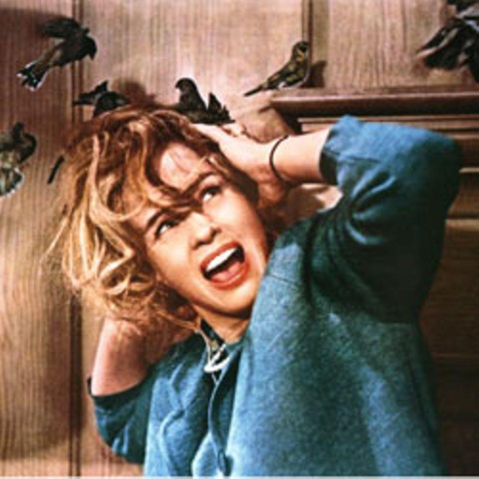 Film-Tipp: Die Vögel