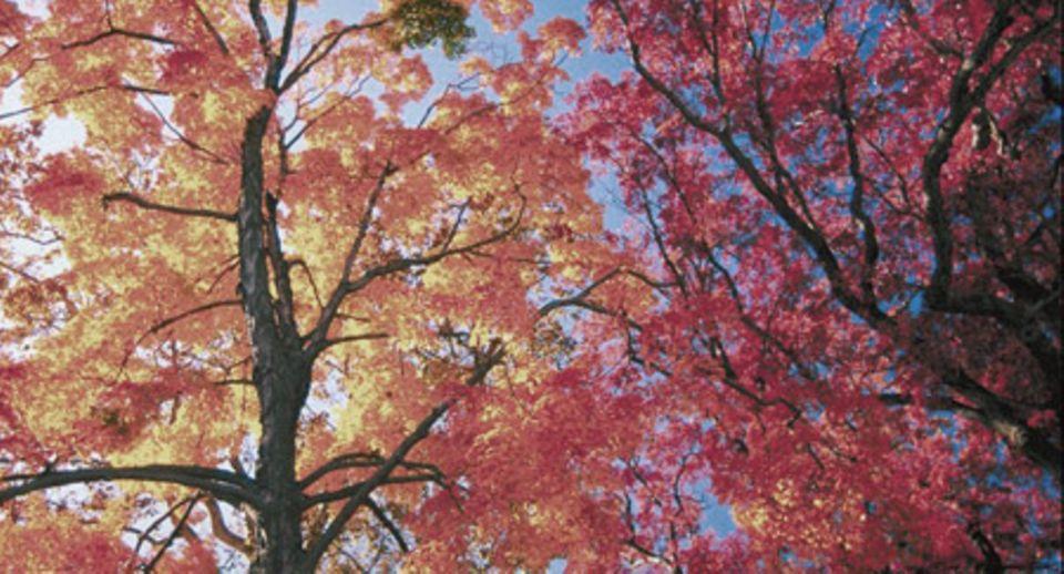 Der Soundtrack meines Herbstes