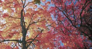 Musik: Der Soundtrack meines Herbstes