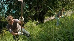 Anpacken beim Steigbau: so werden steile Waldabschnitte erreichbar
