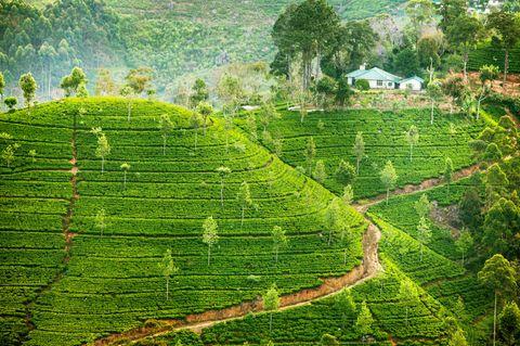Sri Lanka - königliche Insel