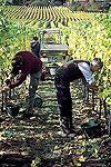 Die Weinmacherin