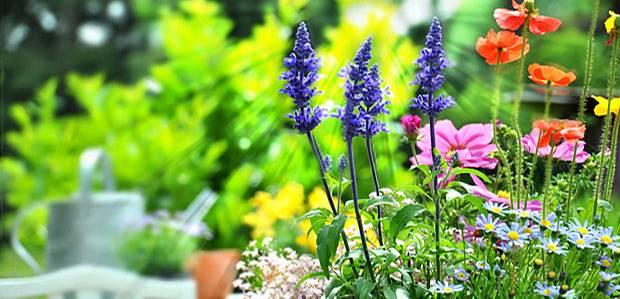 Expertentipps: Mein Garten Im Frühling: Jetzt Geht's Los ... Gartenarbeit Gartengestaltung Der Garten Im Fruhling