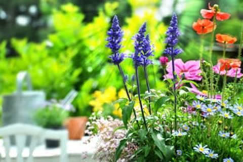 Mein Garten im Frühling: Jetzt geht's los!