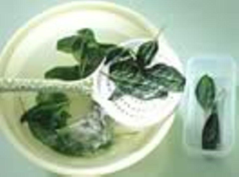 Kochschule: Kochen mit Kräutern