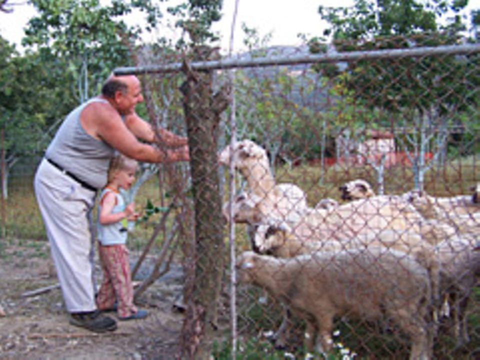 Dimitri und Fred füttern die Schafe
