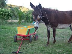 Esel Paul und der Bollerwagen