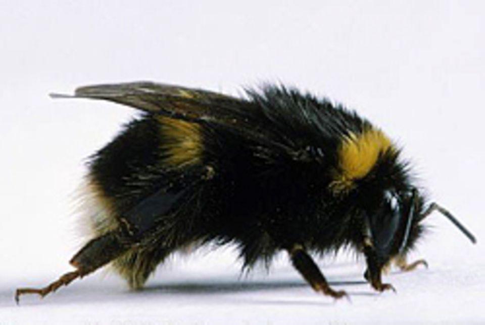 Das hilft gegen Insektenstiche