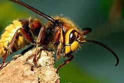 gesund im sommer das hilft gegen insektenstiche. Black Bedroom Furniture Sets. Home Design Ideas