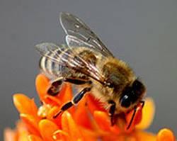 Gesund im Sommer: Das hilft gegen Insektenstiche