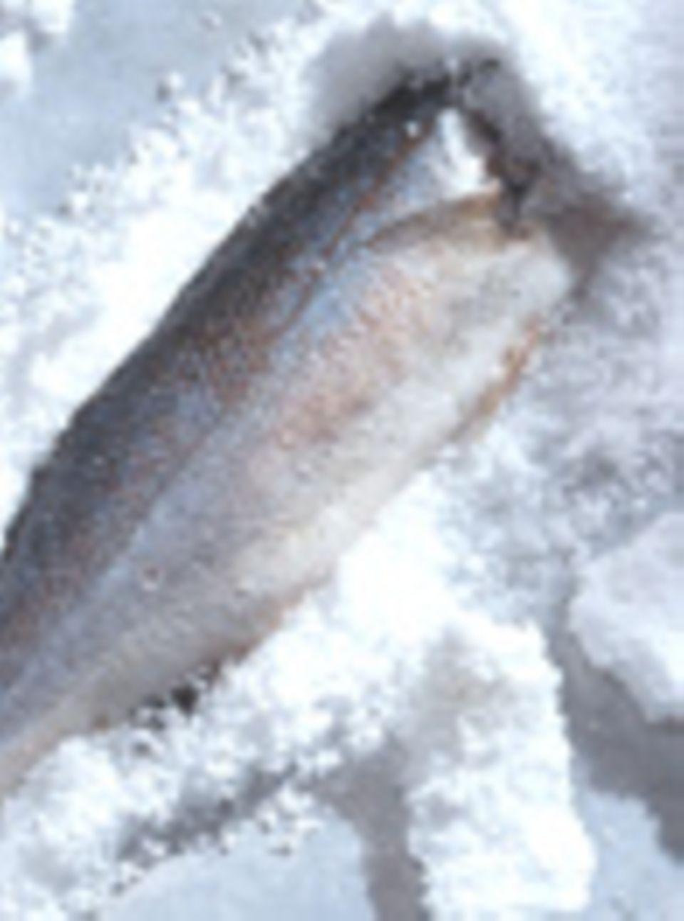 Wolfsbarsch in Salzkruste: Feines für zwei