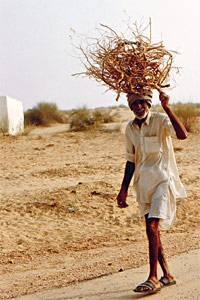 Alltag in Indien: Reisig sammeln für den Ofen wie hier in der Wüste Thar