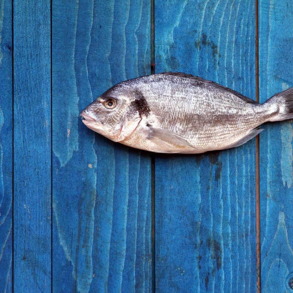 Welchen Fisch können wir bedenkenlos essen?