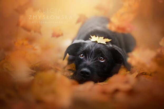 Fotoserie: Wie im Märchen: So bezaubernd habt ihr Hunde noch nie gesehen!
