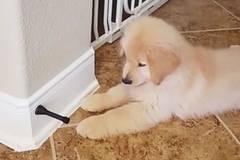 Ein Welpe schlägt Alarm: Da ragt was aus der Wand!