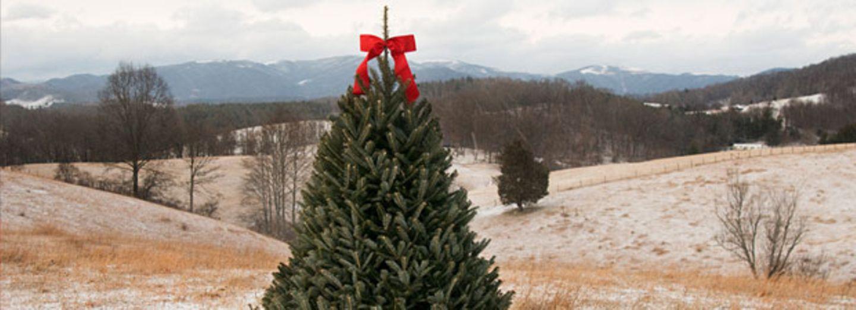 Es steht fest: SO wird das Wetter zu Weihnachten!
