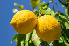Mallorca von Finca zu Finca: Wandern im Zitronenland
