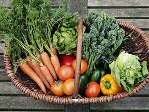 Öko-Tipps: Essen mit gutem Gewissen