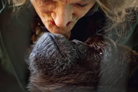 Affenliebe: Vom Leben mit Tieren