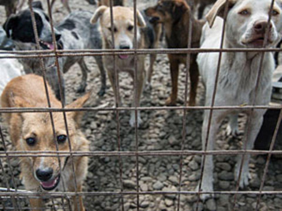 Hund adoptieren: Wie Krümel ihren Weg nach Deutschland fand