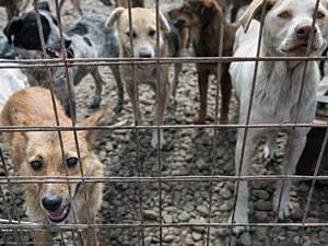 Reportage: Hund adoptieren: Wie Krümel ihren Weg nach Deutschland fand