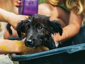 Reportage: Das ist nicht Krümel, aber auch ein süßer Hund.