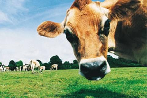 Klimafreundlich essen: Das sollten Sie wissen