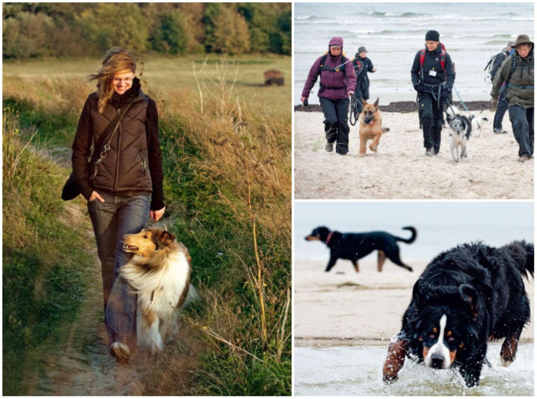 Rügen: Wandern mit Hund