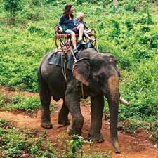 Dschungel-Schaukel - Überraschend hoch und schwankend: Elefantendame Sambun trägt Susanne Arndt und Fred, 8, zwar äußerst brav durch den Dschungel im KhaoSok-Nationalpark nördlich von Phuket - trotzdem hofft Susanne inständig, dass die Sitzbank bitte nicht vom Elefantenrücken rutschen möge...