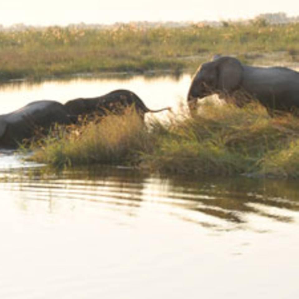 Safari in Namibia: Im Land der großen Flüsse