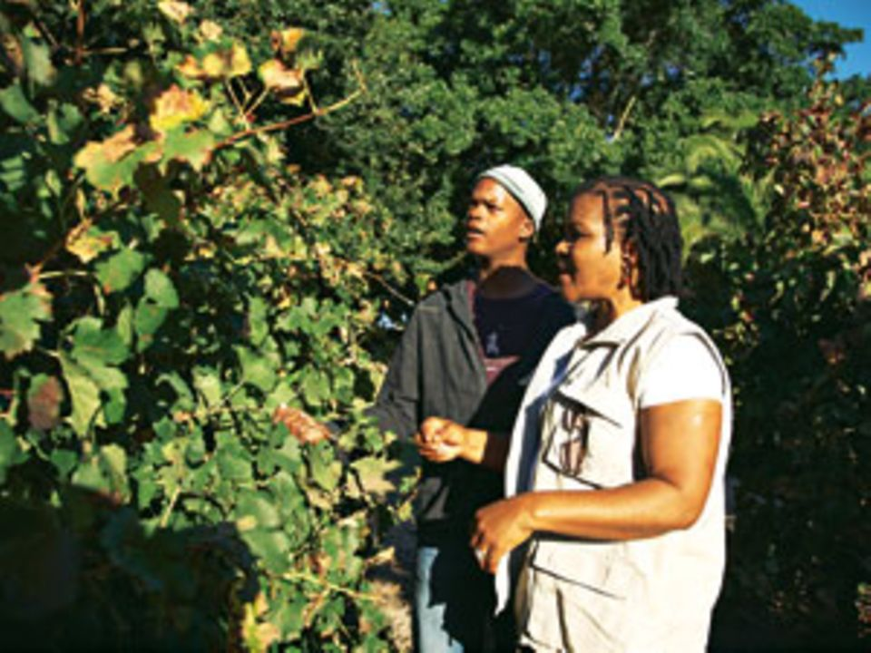 """Beim Wein Winzerin Ntsiki Biyela macht für das Weingut """"Stellekaya"""" bei Stellenbosch ausgezeichnete Rote"""