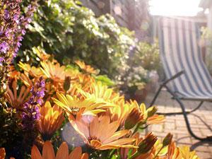 Pflanzen: So überleben sie Ihren Urlaub
