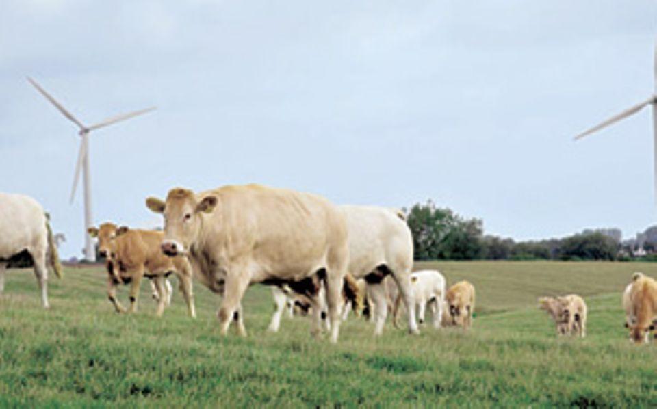 Kuschelig verpackt: die köstliche lokale Bio-Milch