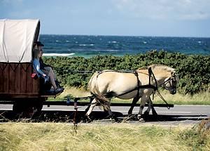 Zwei Pferdestärken gehören auf der Insel Samsø zum Straßenbild - und man muss nie zum TÜV