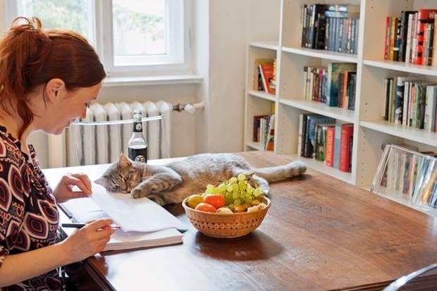 homestory wohnen mit katzen hallo stubentiger. Black Bedroom Furniture Sets. Home Design Ideas