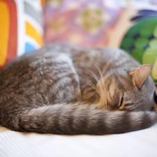 Homestory: Wohnen mit Katzen: Hallo, Stubentiger!