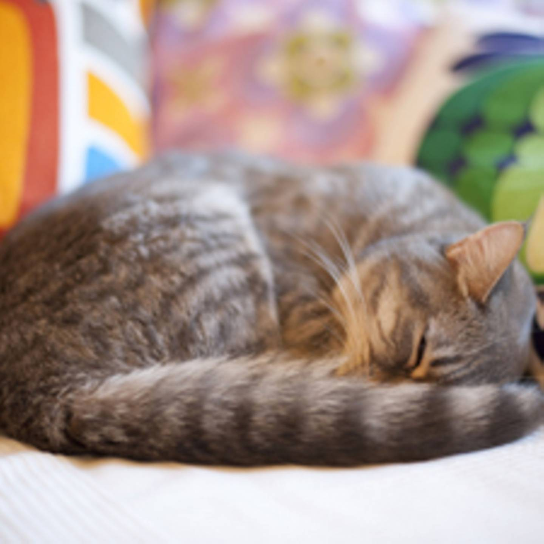 Vom Glück mit Katzen zu wohnen