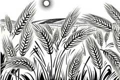 """""""Weizenwampe"""" - Gefahr aus der Ähre?"""