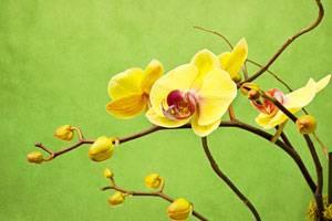 Grüner Daumen: Zimmerpflanzen richtig pflegen - so geht's