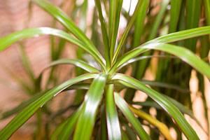 Grüner Daumen: Zimmerpflanzen richtig pflegen - so geht\'s | BRIGITTE.de