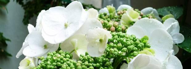 """60 Stimmen: """"Was mich Blumen lehren"""""""
