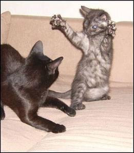 """60 Stimmen: """"Einfach mal auf die innere Katze hören..."""""""