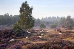 Lüneburger Heide: Kurztrip mit Genuss